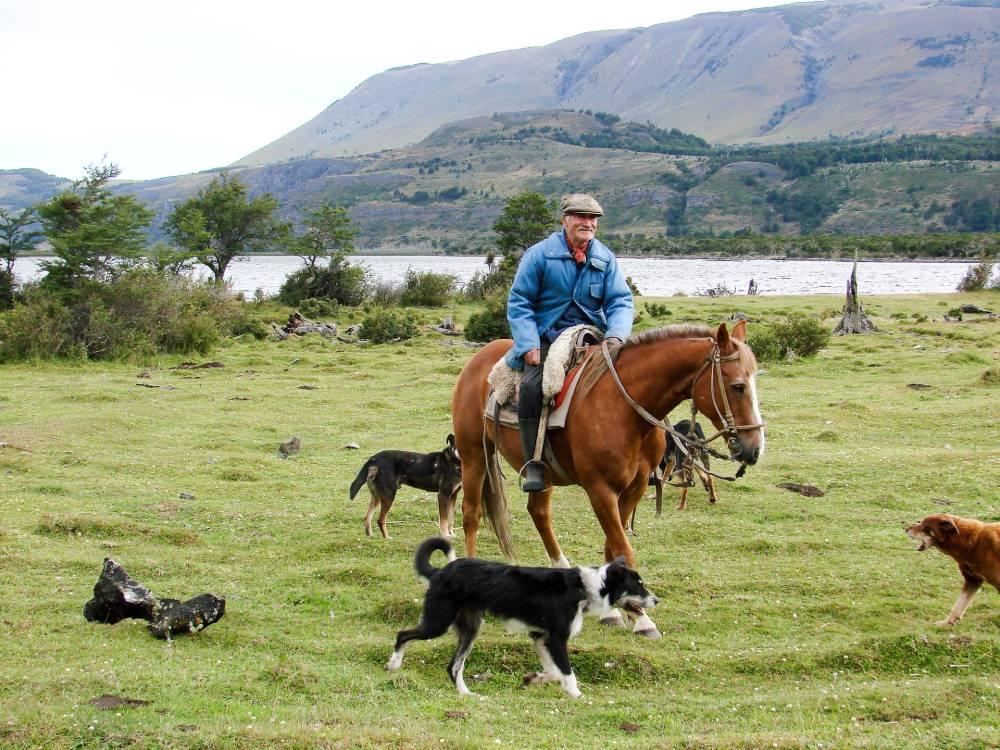 kloubní výživa pro psy a koně